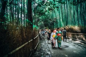 bamboo-trees-bridge-city-115603